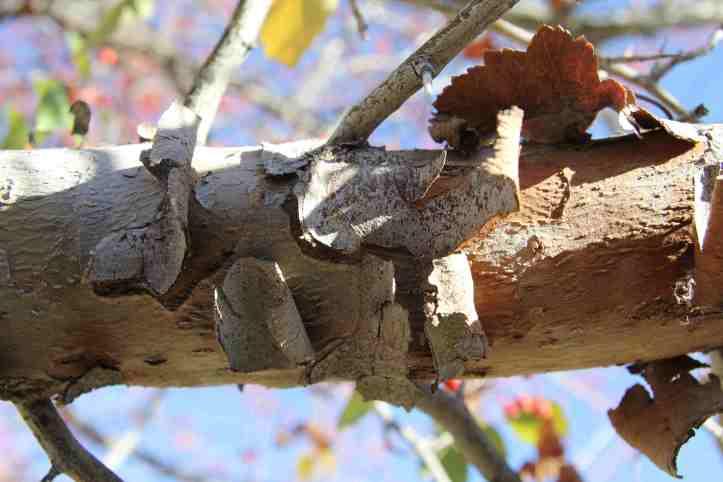 peeling-bark-1